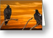 Eagle Prints Greeting Cards - Royal Flush - African Black Eagles Greeting Card by Basie Van Zyl