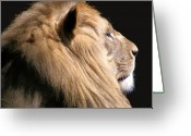 Cat Profile Greeting Cards - Royalty Greeting Card by Scott Hovind
