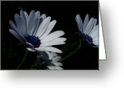 Day Photo Greeting Cards - Sadness and yearning Greeting Card by Edan Chapman