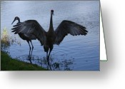 Sandhill Greeting Cards - Sandhill Cranes 2 Greeting Card by Larry Underwood