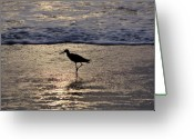 Sandpiper Greeting Cards - Sandpiper On A Golden Beach Greeting Card by Kenneth Albin