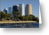 Sculling Greeting Cards - Sculling in Tampa Bay Florida Greeting Card by David Lee Thompson