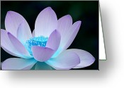 Lotus Greeting Cards - Serene Greeting Card by Photodream Art