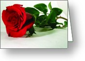 Single Rose Greeting Cards - Single Red Rose Greeting Card by Allison Crandall
