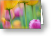Decorativ Photo Greeting Cards - Springtime Greeting Card by Silke Magino