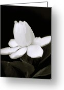 Black And White Floral Greeting Cards - Summer Fragrance Greeting Card by Holly Kempe