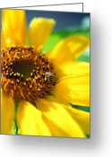 Warn Greeting Cards - Sunflower and Bee Greeting Card by Thomas Firak