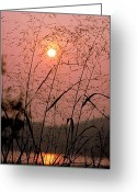 Warn Greeting Cards - Sunrise through the Tall Grass Greeting Card by Thomas Firak