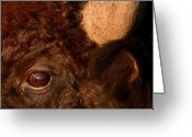 Buffalo Greeting Cards - Sunset Reflections In The Eye Of A Buffalo Greeting Card by Max Allen