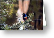 Family Pastels Greeting Cards - Superb Starling Greeting Card by Carol McCarty