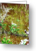 Florida Swamp Greeting Cards - Swamp Fishing Greeting Card by Peter  McIntosh