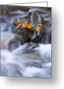 Cascade Greeting Cards - Textures of Autumn Greeting Card by Mike  Dawson