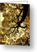 Tree Artwork Mixed Media Greeting Cards - Touching Heaven Greeting Card by Diane C Nicholson