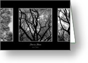 Tree Artwork Mixed Media Greeting Cards - Trees in Threes Greeting Card by Diane C Nicholson