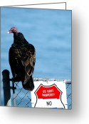 Buzzard Photo Greeting Cards - Turkey Buzzard Greeting Card by Clayton Bruster