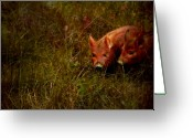 Boar Greeting Cards - Two piglets Greeting Card by Angel  Tarantella