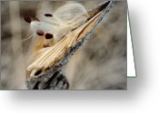 Select Greeting Cards - Wild Art Work.. Greeting Card by Al  Swasey