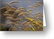 Wild Grass Greeting Cards - Wild Grass in the Wind Greeting Card by Chad Davis