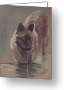 Nature And Wolves Greeting Cards - Wolf Drinking Greeting Card by Morgan Fitzsimons