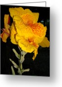 Canna Greeting Cards - Yellow Canna Greeting Card by Scott Easom