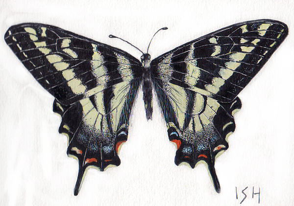 Swallowtail Butterfly  Print by Inger Hutton