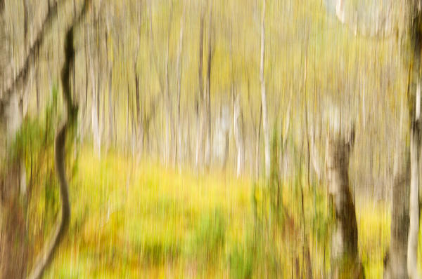 Abstract Forest Scenery Print by Gry Thunes