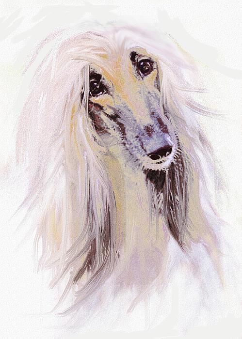 Afghan Hound Print by Jane Schnetlage