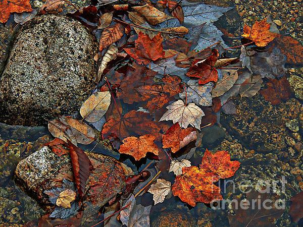 Marcia Lee Jones - Autumn Leaves
