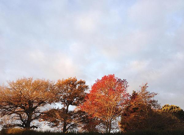 Autumn Print by Les Cunliffe