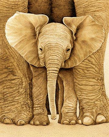 Cate McCauley - Baby Elephant