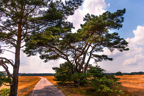 Bike Track In Hoge Veluwe National Park. Netherlands Print by Jenny Rainbow