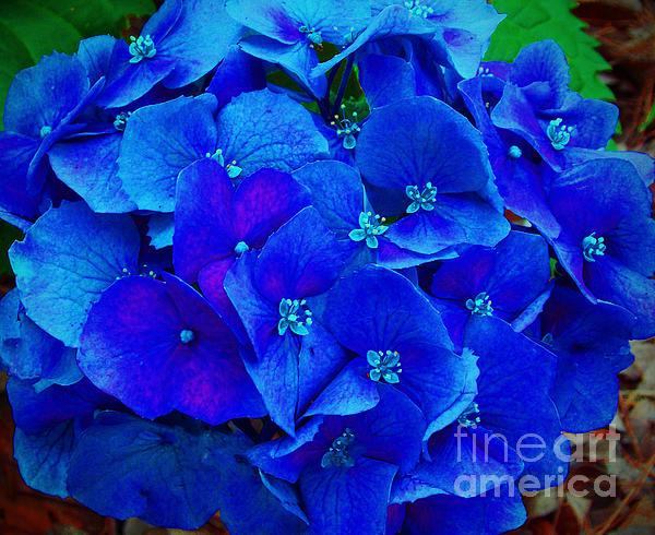 Blue Beauty Print by Annette Allman
