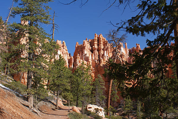 Bryce Canyon National Park Print by Michael J Bauer