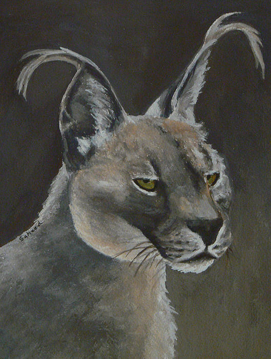 Caracal Cat Print by Margaret Saheed