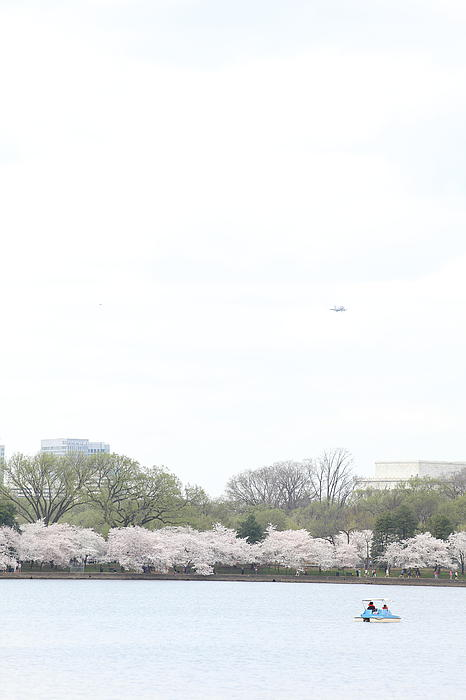 Cherry Blossoms - Washington Dc - 011320 Print by DC Photographer