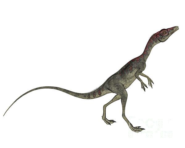 Compsognathus Dinosaur by Elena Duvernay