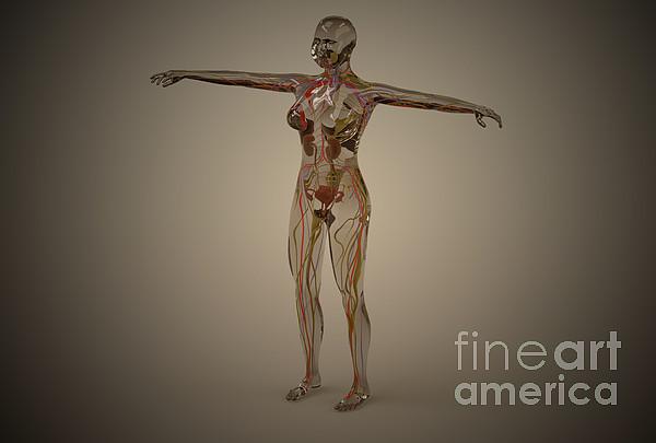 Conceptual Image Of Human Nervous Print by Stocktrek Images