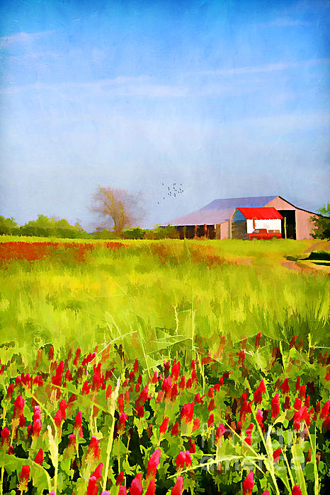 Country Kind Of Spring Print by Darren Fisher