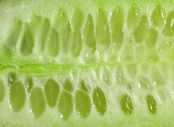 Tom Gowanlock - Cucumber