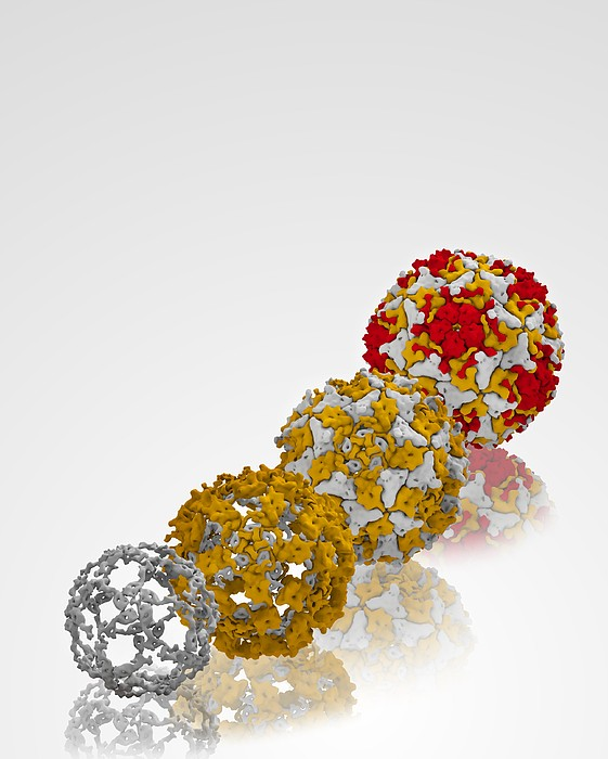 Enterovirus Capsid Proteins Structure Print by Science Photo Library
