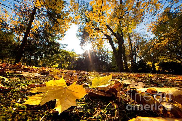 Fall Autumn Park. Falling Leaves Print by Michal Bednarek