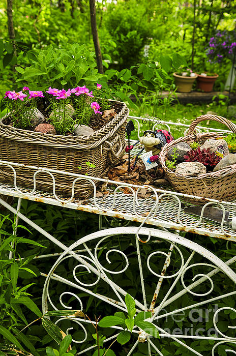 Flower Cart In Garden Print by Elena Elisseeva