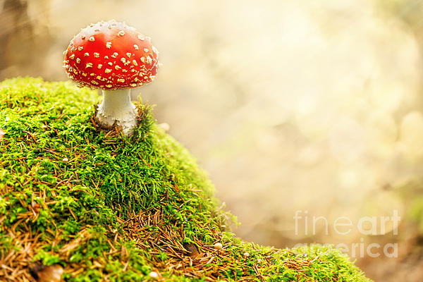Fly Agaric Print by Stefan Holm