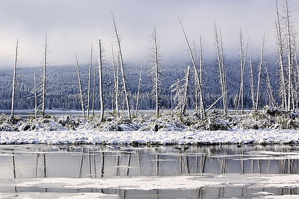 Fresh Snowfall And Bare Trees Print by Ken Gillespie