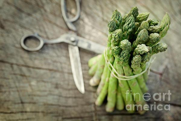 Freshly Harvested Asparagus Print by Mythja  Photography