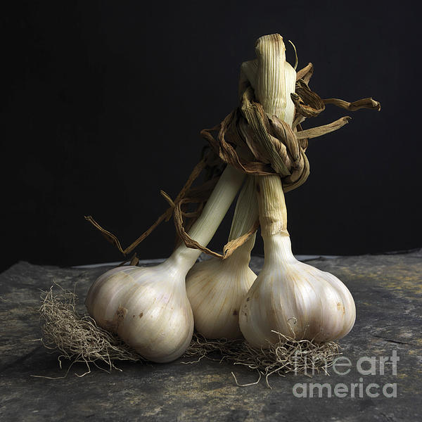 Garlic Print by Bernard Jaubert