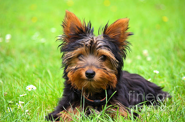 Hello Toby Print by Angela Doelling AD DESIGN Photo and PhotoArt