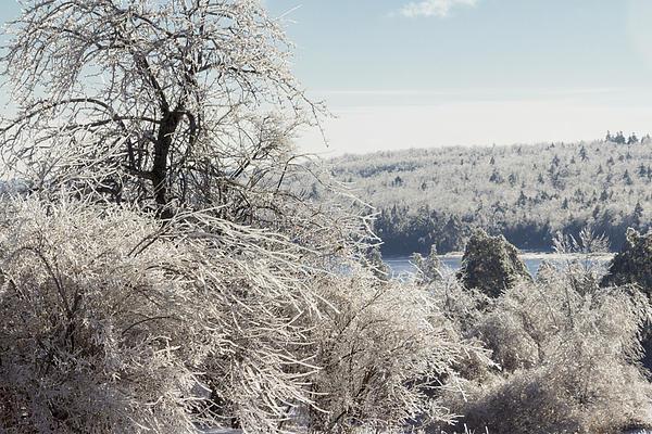 Ice Storm - 2013 Print by Jim Walker