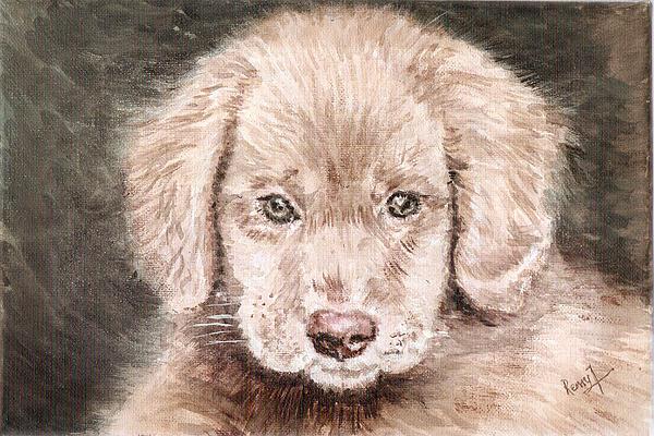 Remy Francis - Irish Setter pup