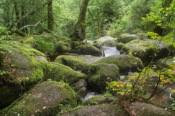 Landscape Of Becky Falls Waterfall In Dartmoor National Park Eng Print by Matthew Gibson